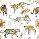 Leopard,jaguar cat animal seamless pattern with tropical golden leaves. On white stock images