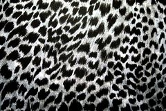 Leopard, jaguar. Fur pattern on the fabric. Print color and black and white. stock images