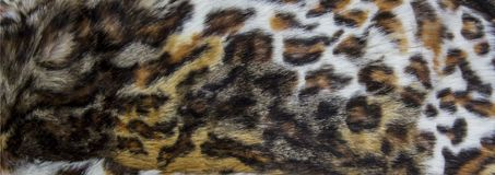 Leopard, Jaguar fur with stained on skin texture, close up.  stock photos