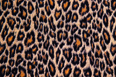 Leopard, jaguar, lynx skin Royalty Free Stock Images
