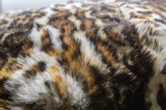 Leopard, Jaguar-Pelz mit oben befleckt auf Hautbeschaffenheit, Abschluss lizenzfreie stockbilder