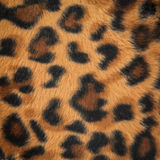 Leopard or jaguar skin pattern Royalty Free Stock Photo