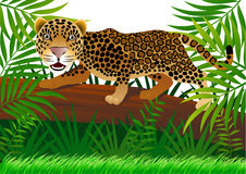 Leopard in the jungle Stock Photos
