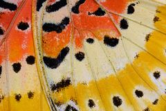 Leopard Lacewing Butterfly (Cethosia cyane) Royalty Free Stock Photography