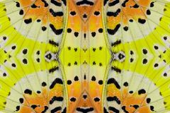 Leopard Lacewing Butterfly (Cethosia cyane) Royalty Free Stock Photo