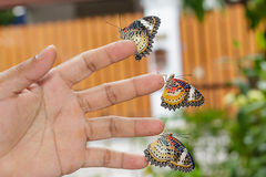 Leopard lacewing (Cethosia cyane euanthes) butterflies Royalty Free Stock Photo