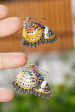 Leopard lacewing (Cethosia cyane euanthes) butterflies Royalty Free Stock Images