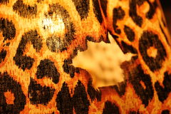 Leopard lamp. Is a wery important part of design Stock Photo