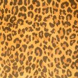 Leopard leather pattern texture Stock Photos
