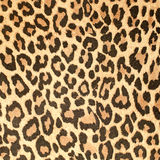 Leopard leather pattern texture. Closeup background stock images