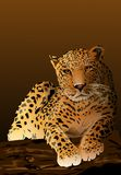 The leopard lies on a tree. Stock Photography