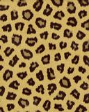 Leopard medium spots short fur. Textured background royalty free illustration