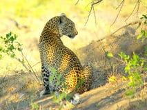 Sydliga afrikanska djur Arkivbild