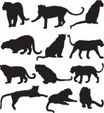Leopard or panther silhouette contour Royalty Free Stock Photography