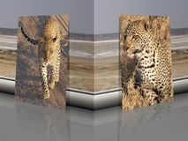 Leopard Panthera pardus with african background stock photos
