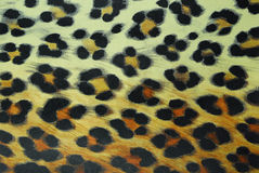 Leopard pattern Royalty Free Stock Photos