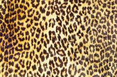 Leopard pattern. Closeup of a brown and black leopard print Stock Photography