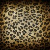 Leopard pattern Stock Image