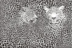 Leopard pattern background Royalty Free Stock Images