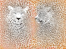Leopard pattern with head Royalty Free Stock Photography