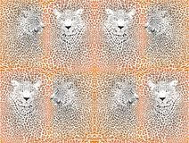 Leopard pattern with head Royalty Free Stock Images
