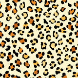 Leopard pattern Royalty Free Stock Photography