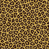 Leopard pattern texture Royalty Free Stock Photography