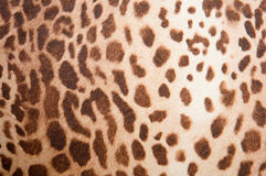 Leopard pattern texture Stock Images