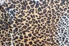 Leopard pattern texture. Abstract leopard pattern texture background stock image