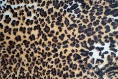 Leopard pattern texture. Abstract leopard pattern texture background royalty free stock photography
