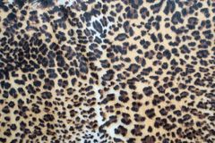 Leopard pattern texture. Abstract leopard pattern texture background stock photos