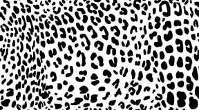 Leopard. Pattern texture repeating seamless monochrome black & white. Stock Images