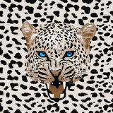 Leopard pattern vector. Head leopard spotted pattern background Royalty Free Stock Photography
