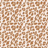 Leopard pattern vector. Leopard spotted pattern background Royalty Free Stock Photography