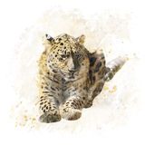 Leopard Portrait Watercolor Stock Images