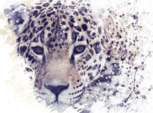 Leopard Portrait Watercolor. Digital Painting of Leopard Portrait Royalty Free Stock Photography