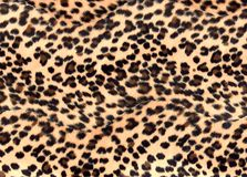 Leopard print. A leopard print back ground Royalty Free Stock Image