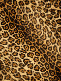 Leopard print. Large leopard pattern / skin / print background Stock Image
