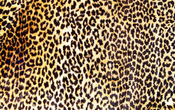 Leopard print Stock Image