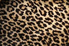 Leopard print. Design - fake fur Royalty Free Stock Photo