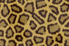 Leopard print background Stock Image