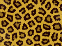 Leopard print background royalty free stock photos