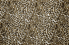 Leopard Print. Brown and white leopard print background
