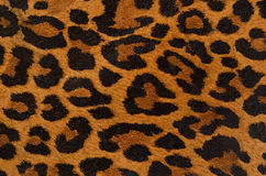 Leopard print pattern Stock Image