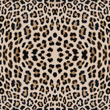 Leopard print pattern skin. Repeat animal pattern Royalty Free Stock Photography