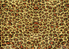 Leopard print texture Royalty Free Stock Images