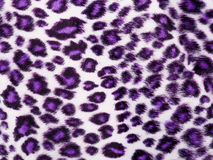 Leopard Printed in purple Royalty Free Stock Photos