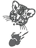 Leopard puma or jaguar face with print of paw Royalty Free Stock Photography