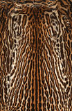Leopard real fur texture Stock Images