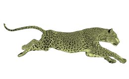 Leopard running isolated Royalty Free Stock Photos